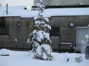 雪景色になりました。